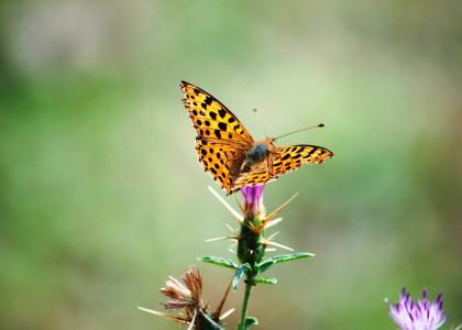 butterfly-861170_1280